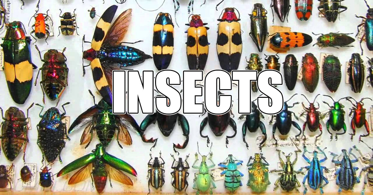 insects OpenGraph Image